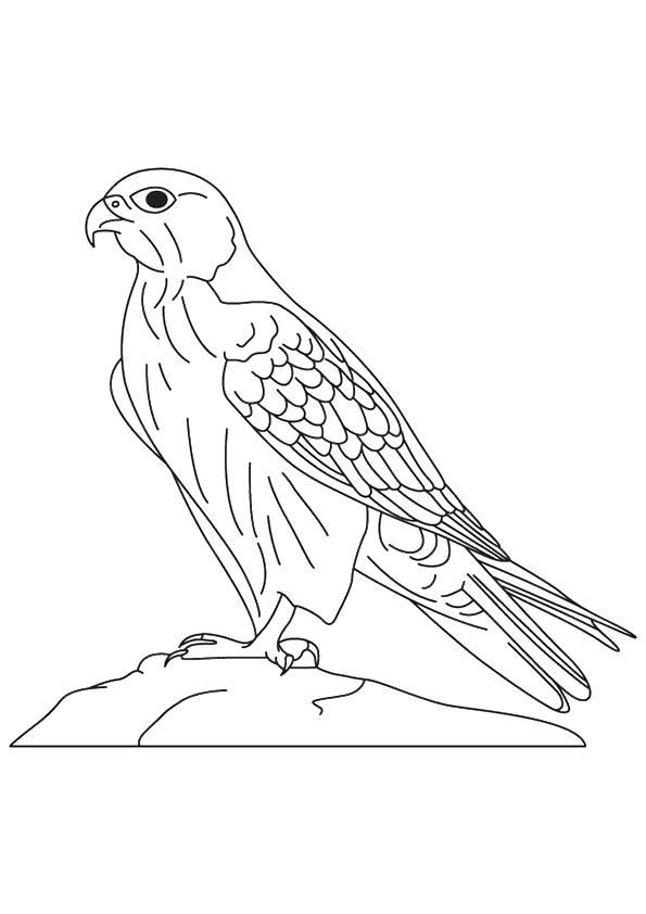 falcon-coloring-page-0001-q2