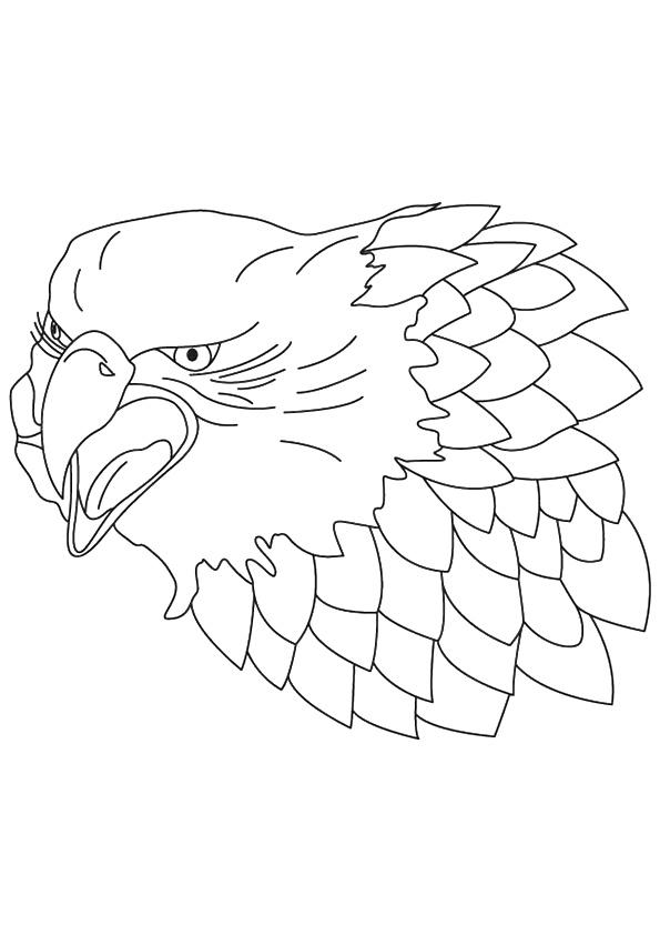 falcon-coloring-page-0002-q2
