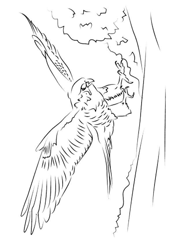 falcon-coloring-page-0003-q2