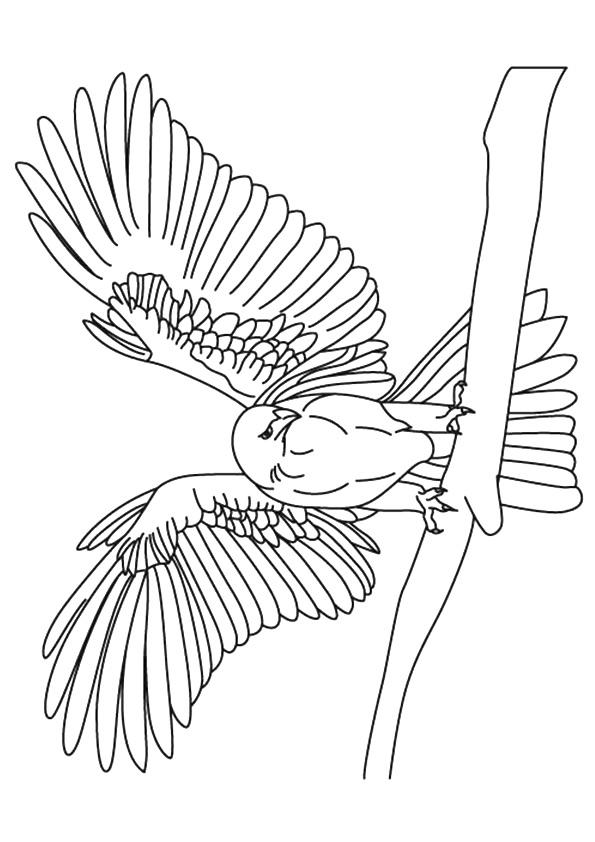 falcon-coloring-page-0006-q2