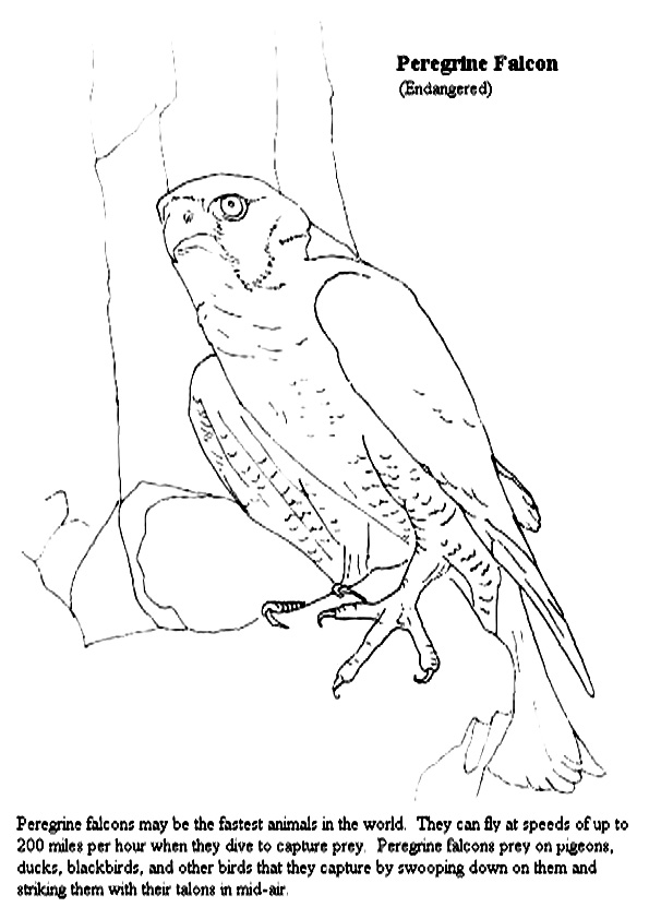 Falcon: Coloring Pages & Books - 100% FREE and printable!