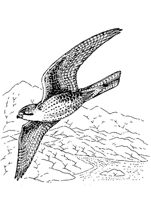 falcon-coloring-page-0010-q2