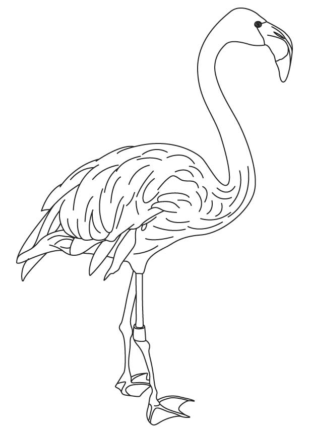 flamingo-coloring-page-0021-q1