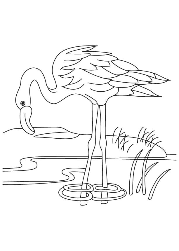 flamingo-coloring-page-0023-q1