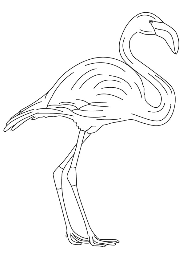 flamingo-coloring-page-0031-q2