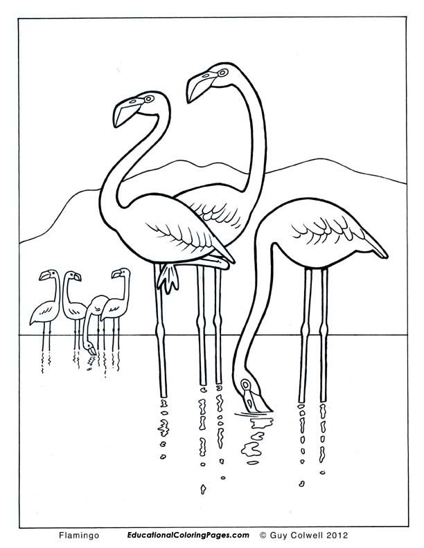 flamingo-coloring-page-0032-q1