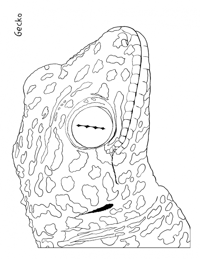 gecko-coloring-page-0002-q1