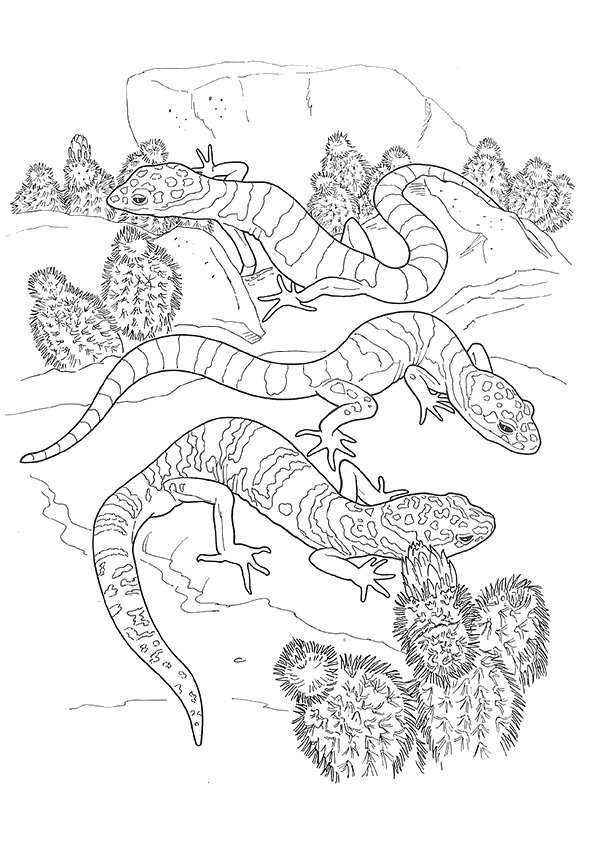 gecko-coloring-page-0004-q2