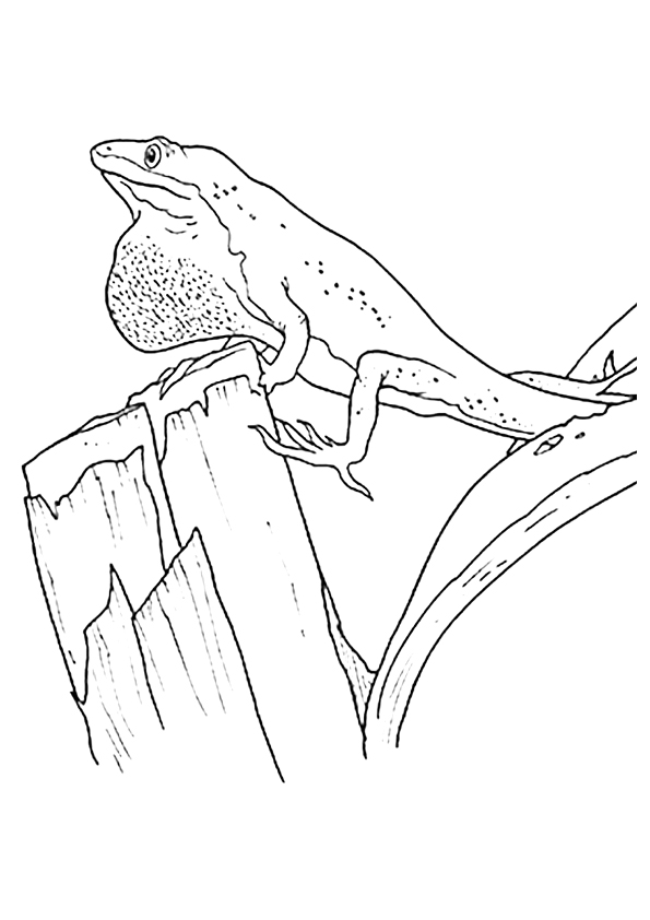 gecko-coloring-page-0007-q2