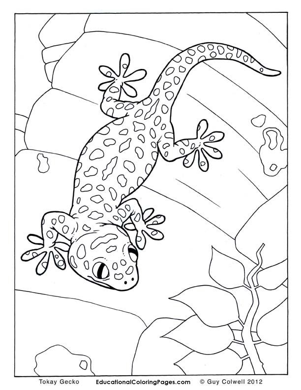 gecko-coloring-page-0011-q1