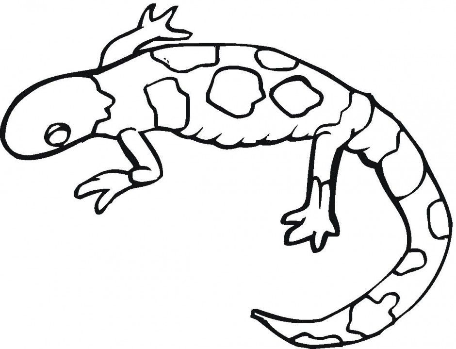 gecko-coloring-page-0013-q1