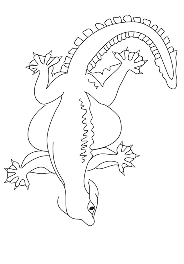 gecko-coloring-page-0023-q2