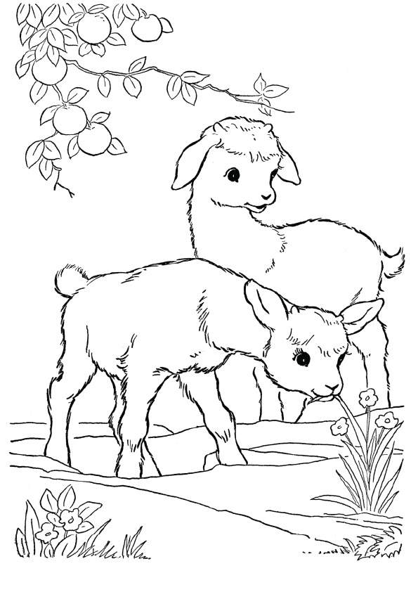 goat-coloring-page-0006-q2
