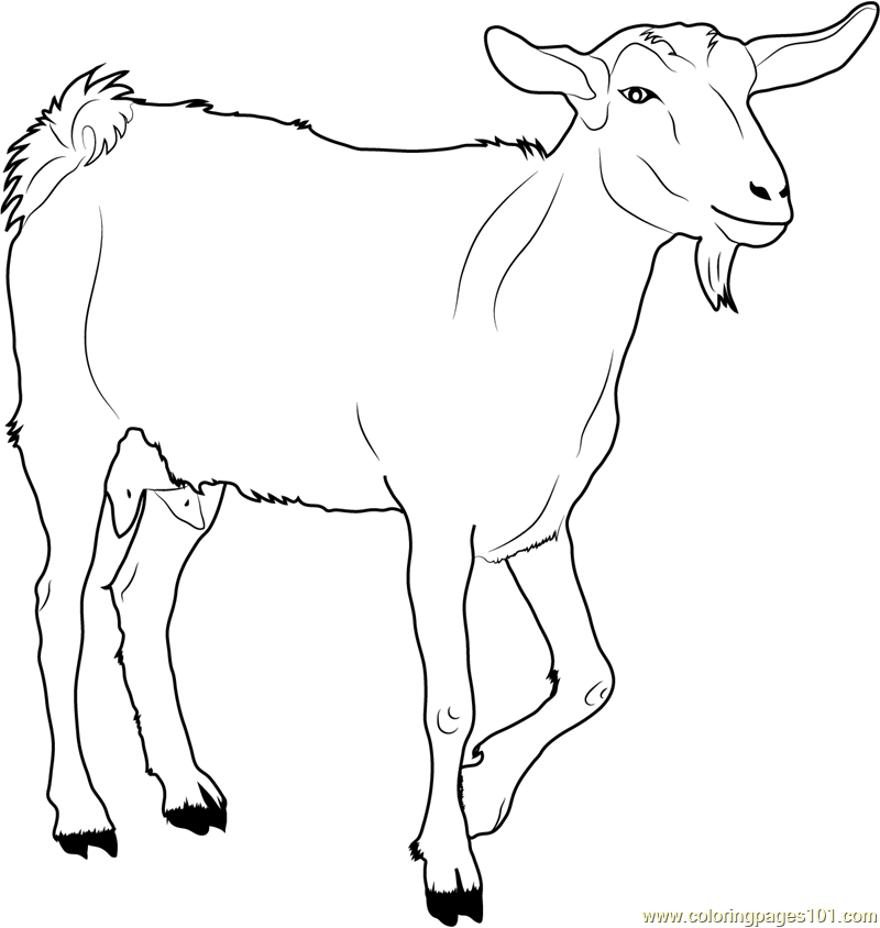goat-coloring-page-0013-q1
