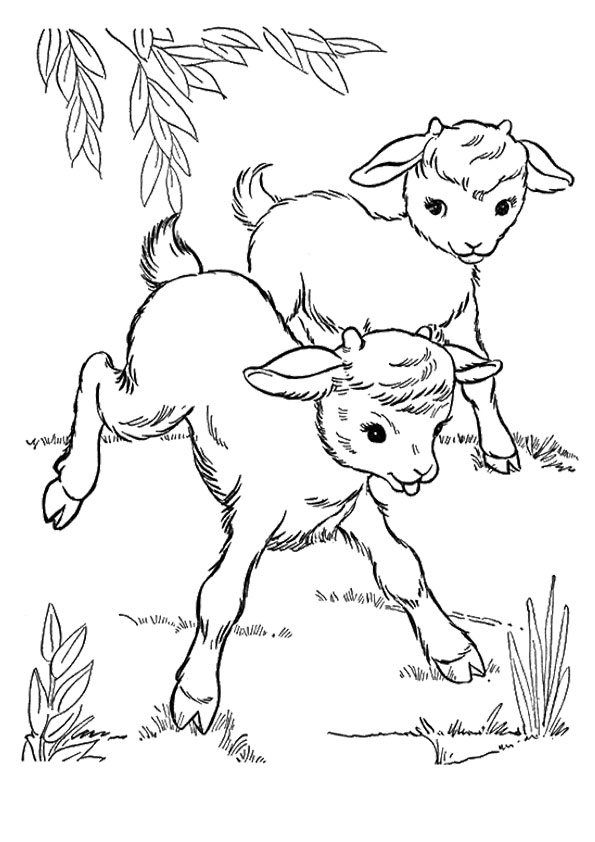 goat-coloring-page-0023-q2