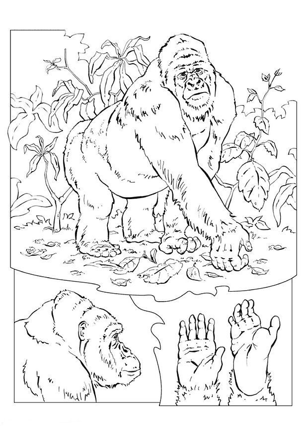 gorilla-coloring-page-0009-q1