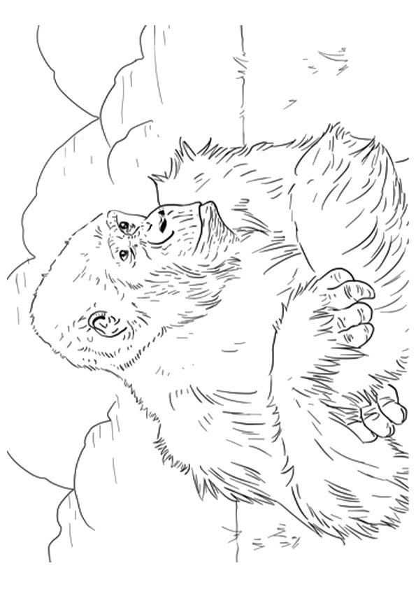 gorilla-coloring-page-0014-q2
