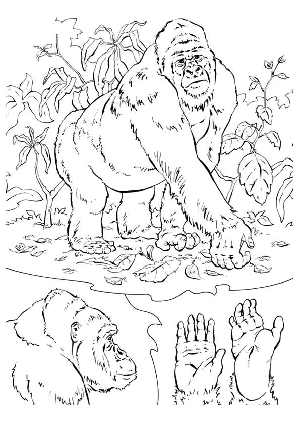 gorilla-coloring-page-0017-q2