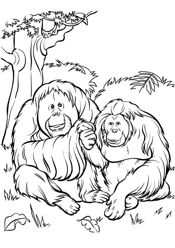 gorilla-coloring-page-0019-q2