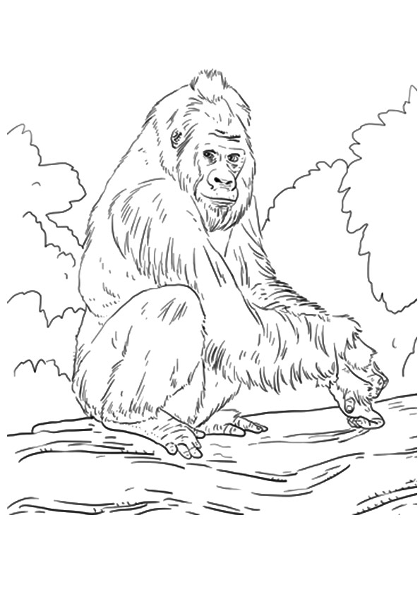 gorilla-coloring-page-0021-q2