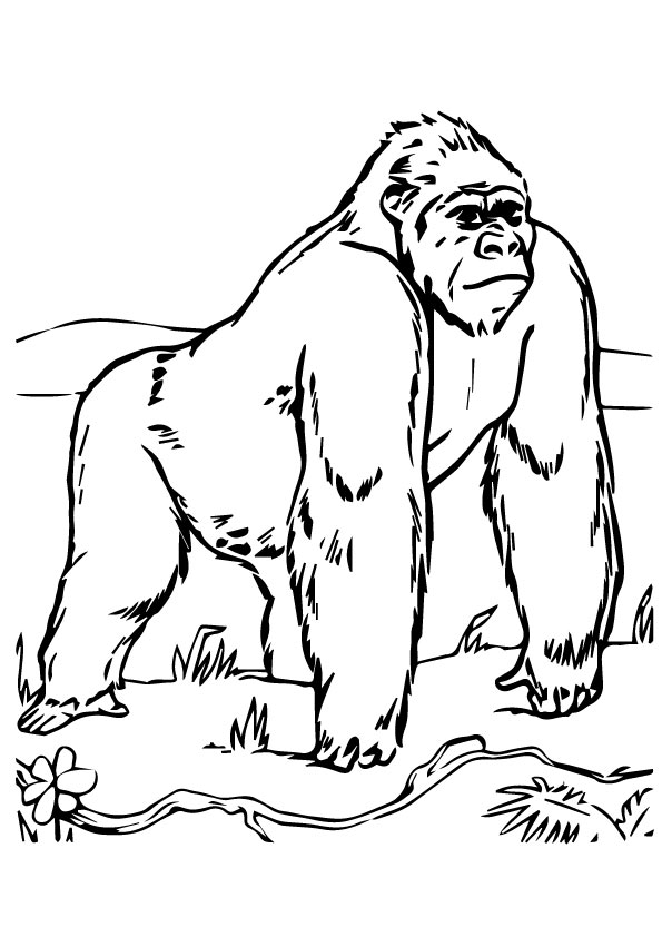 gorilla-coloring-page-0029-q2