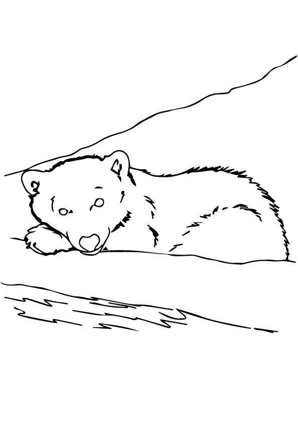 grizzly-bear-coloring-page-0008-q2