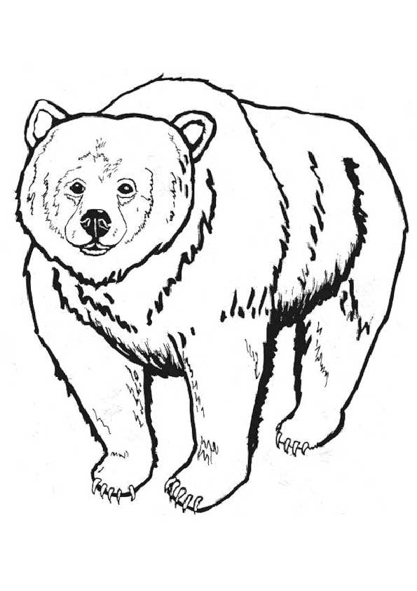 grizzly-bear-coloring-page-0009-q2