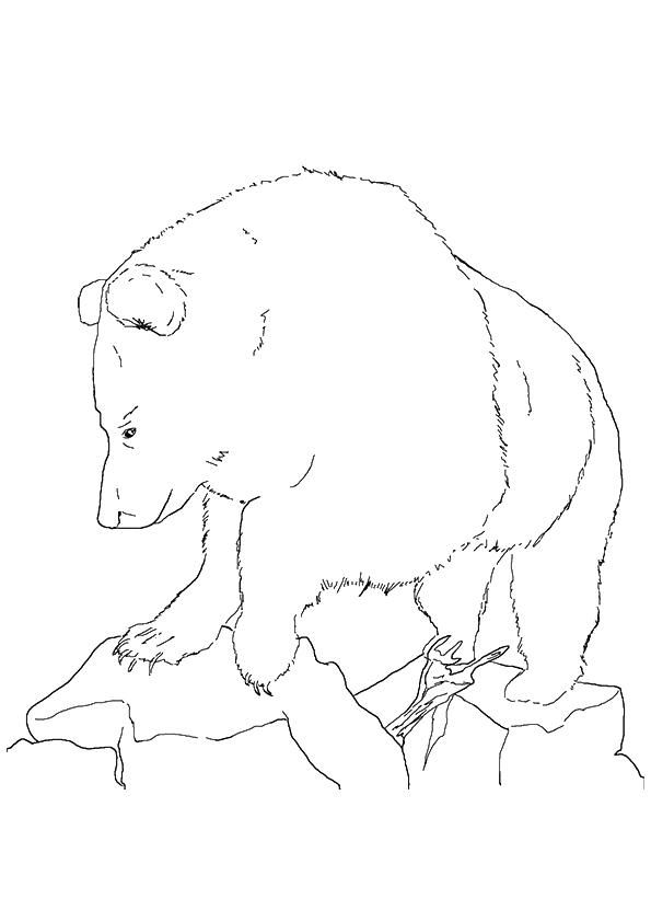 grizzly-bear-coloring-page-0012-q2