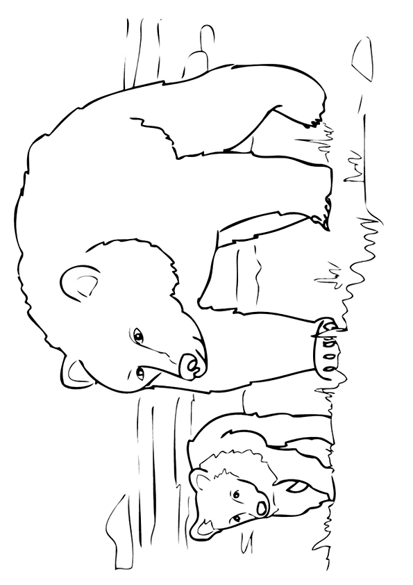 grizzly-bear-coloring-page-0021-q2