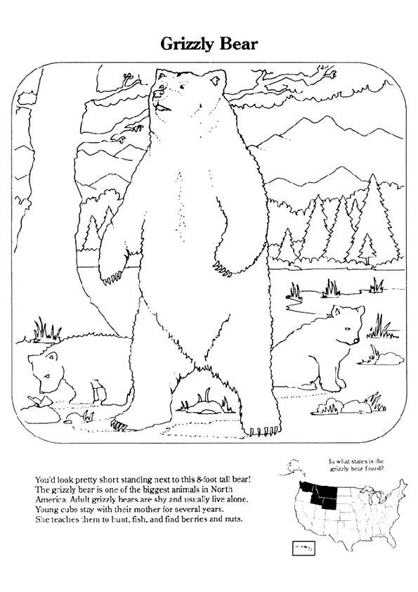 grizzly-bear-coloring-page-0022-q2