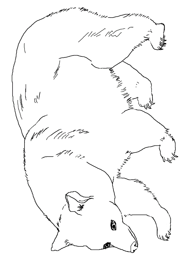 grizzly-bear-coloring-page-0027-q2