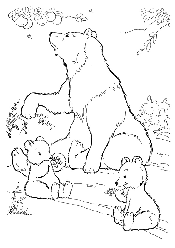 grizzly-bear-coloring-page-0031-q2