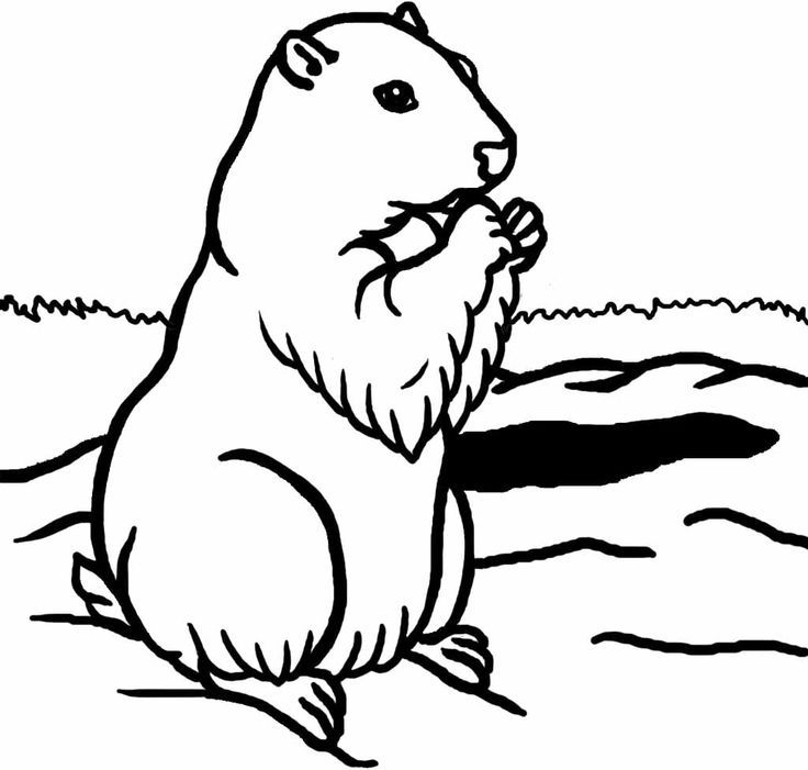 groundhog-day-coloring-page-0022-q1