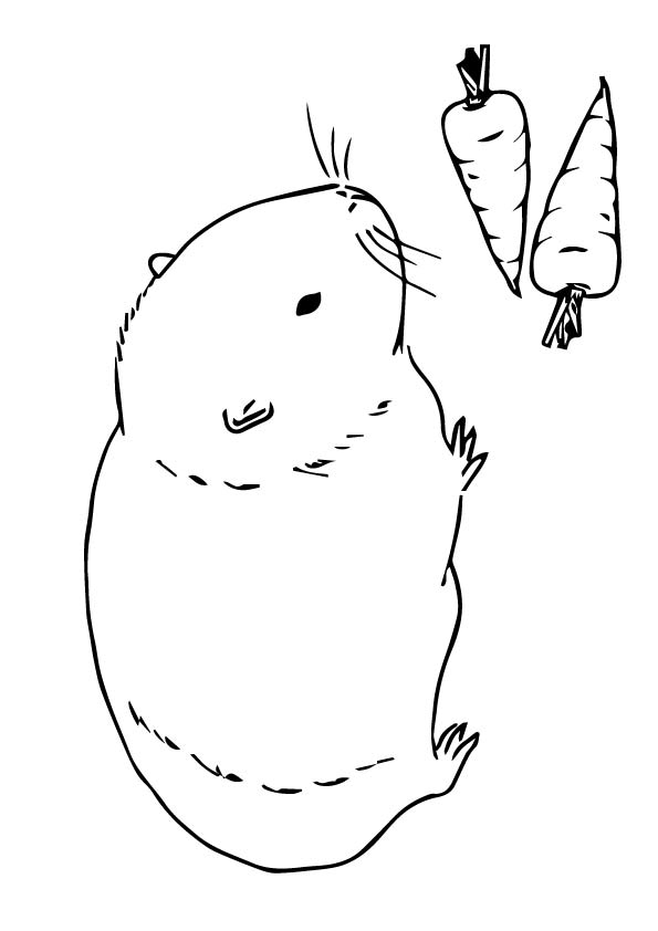 guinea-pig-coloring-page-0001-q2
