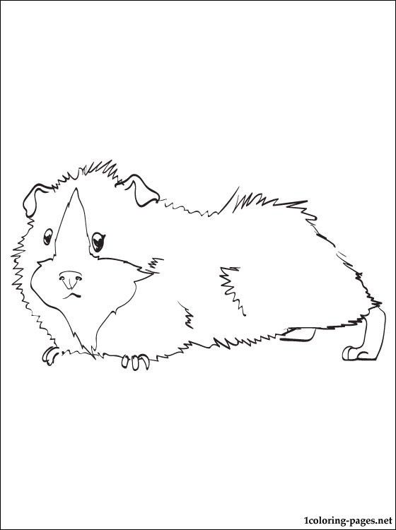 guinea-pig-coloring-page-0002-q1