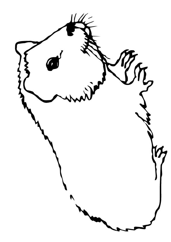 guinea-pig-coloring-page-0004-q2