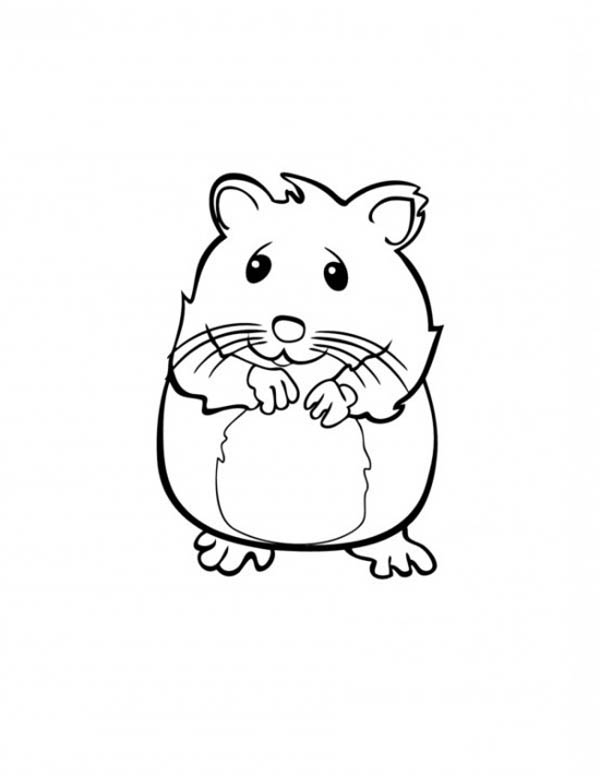 guinea-pig-coloring-page-0010-q1