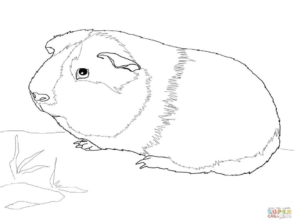 guinea-pig-coloring-page-0011-q1