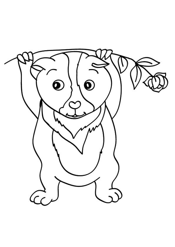 guinea-pig-coloring-page-0024-q2