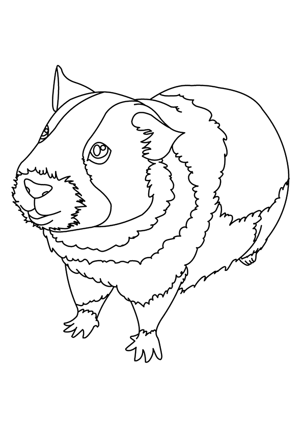 guinea-pig-coloring-page-0027-q2