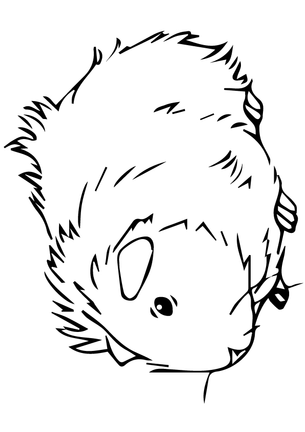 guinea-pig-coloring-page-0028-q2