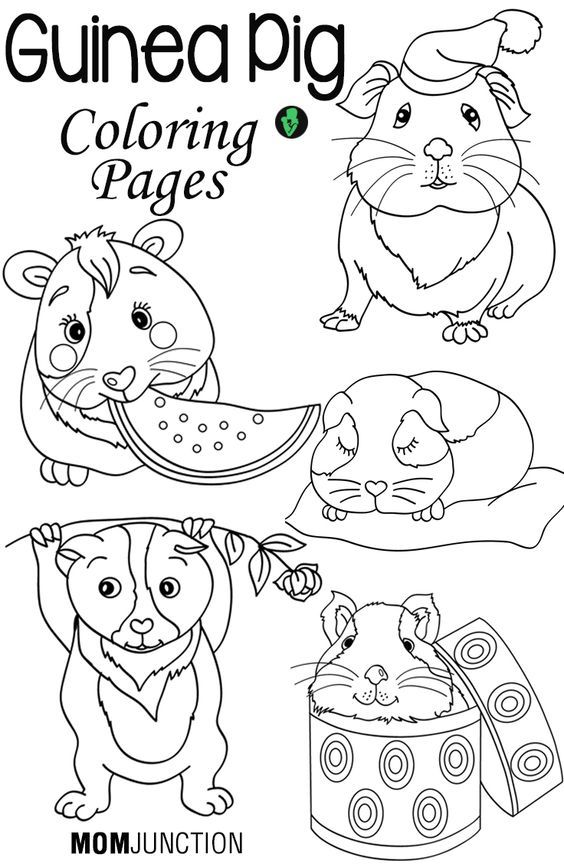 guinea-pig-coloring-page-0029-q1