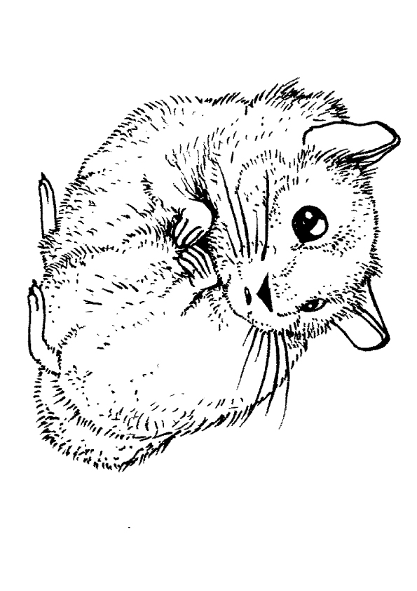hamster-coloring-page-0006-q2