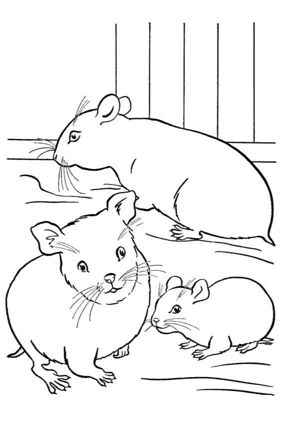 hamster-coloring-page-0012-q2