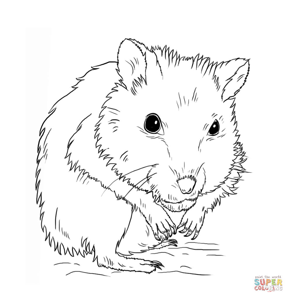 hamster-coloring-page-0014-q1