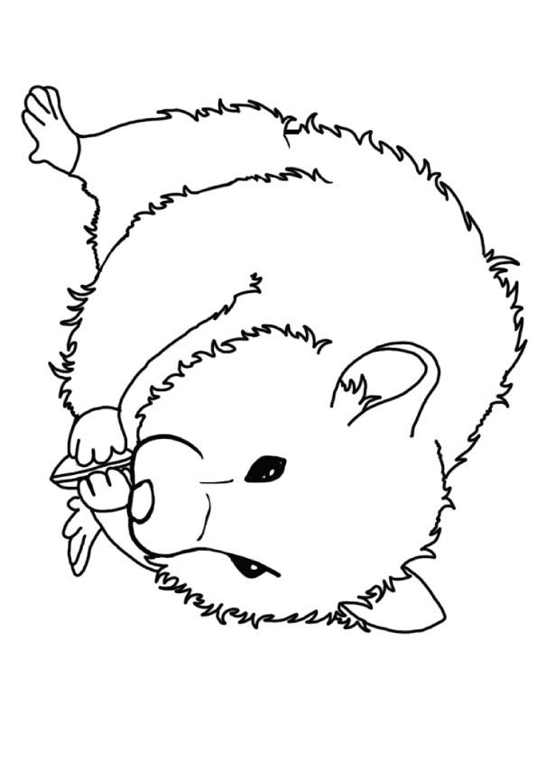 hamster-coloring-page-0023-q2