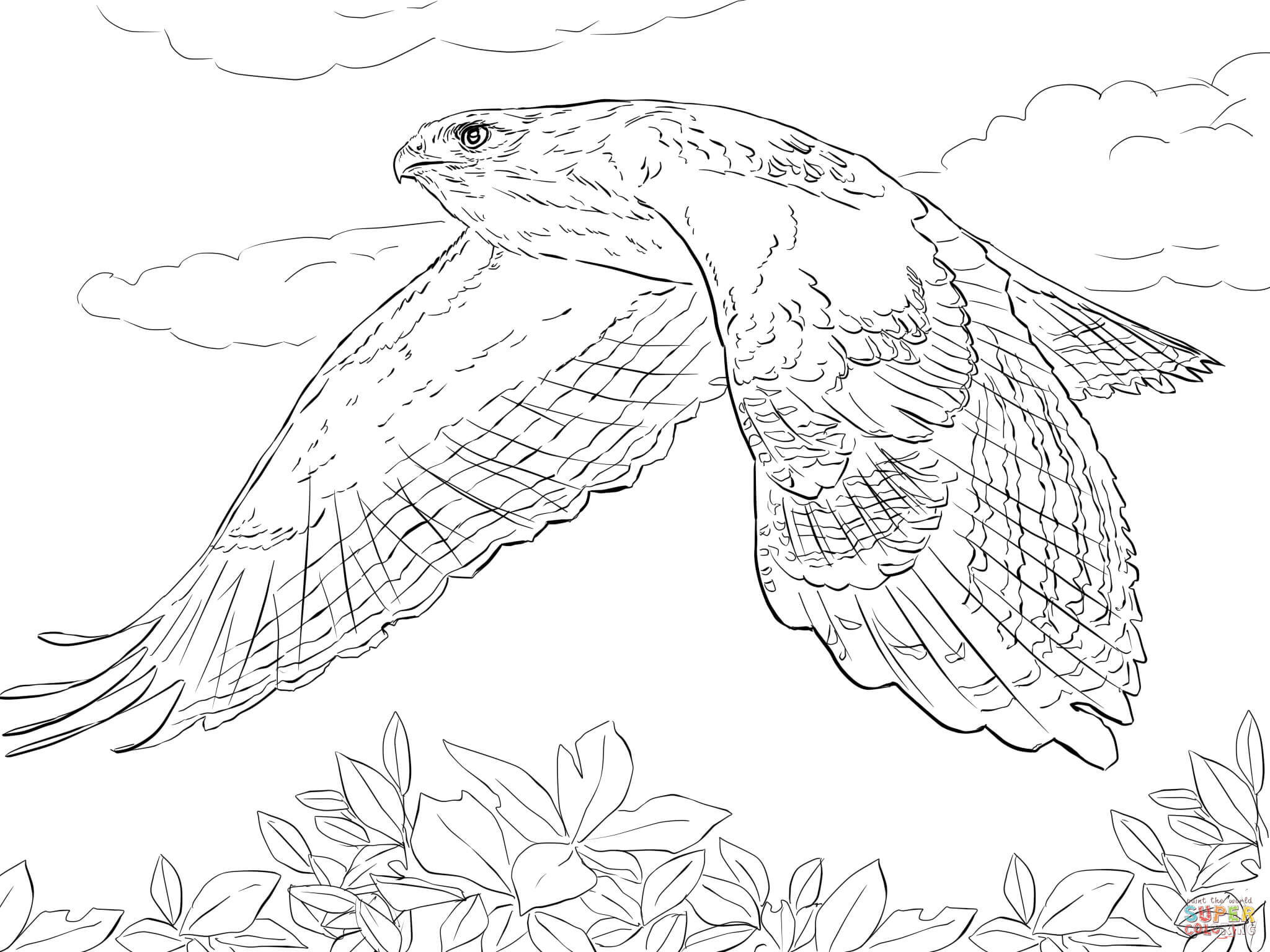 hawk-coloring-page-0001-q1