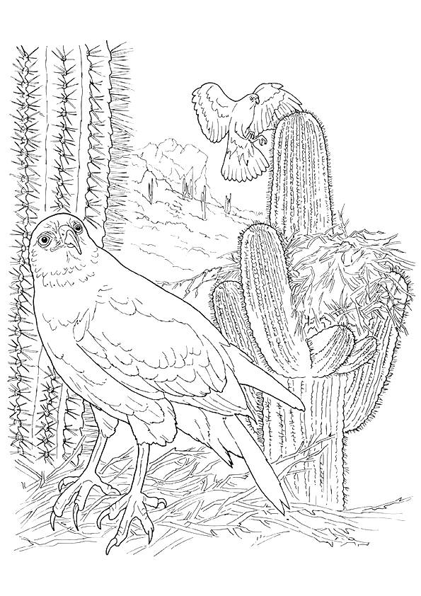 hawk-coloring-page-0003-q2