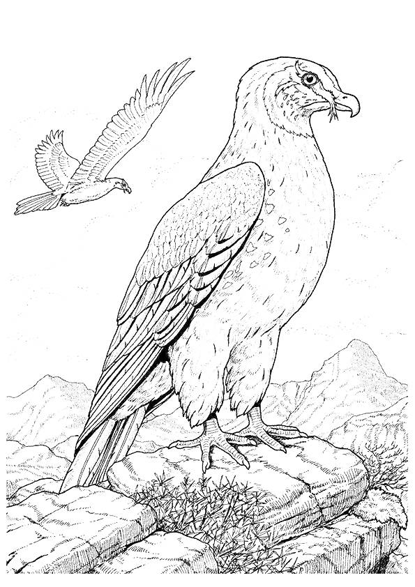 hawk-coloring-page-0004-q2