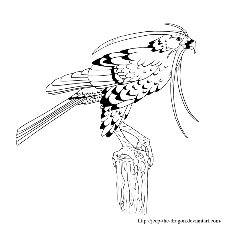 hawk-coloring-page-0007-q1